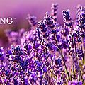 Pourquoi choisir Young Living ?