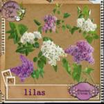 preview_lilas1_1b310b2