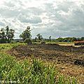 Étang du Bischwald : fin des travaux de <b>restauration</b> écologique