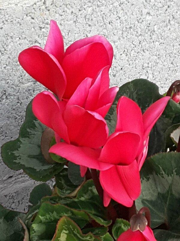 20151117_132949_001