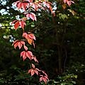 Automne flamboyant et <b>drles</b> de <b>Dames</b>