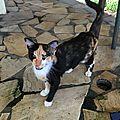 Pepper, jeune chatte dans une case inoccupée ...