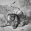 Les Fables de la Fontaine et la vertu de Prudence - Le <b>lion</b> et le moucheron