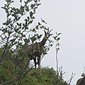 faune de montagne