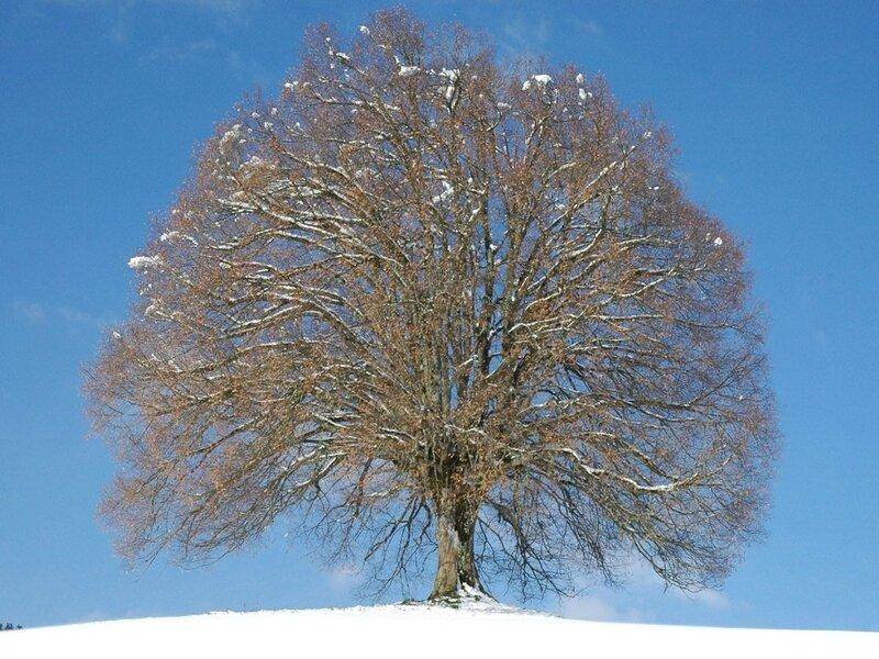 6-Arbre-hiver