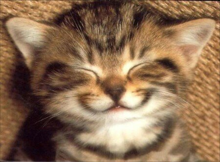 chat_sourire