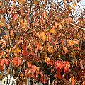 Soir d'automne avec vent...