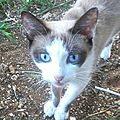 Engie, jeune chatte pleine, Paprika, Papaye, Mangue, Madras, Kola, Réglisse.
