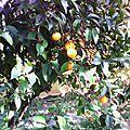 Les <b>Mercredis</b> Gourmands à l'orange ..suite..