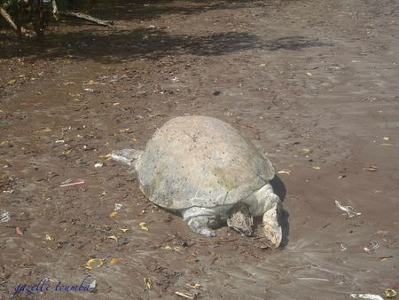 tortue 3