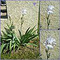 Broderie de l'An Neuf ... et une jolie fleur ...