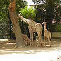 Lisbonne / Lisboa. Agosto 2014. Jardim zoologico.