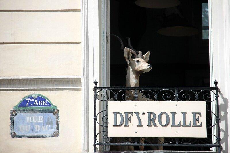 2-Deyrolle, animaux_5582