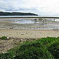 Un séjour en Nouvelle-Calédonie pour l'étude des raies manta