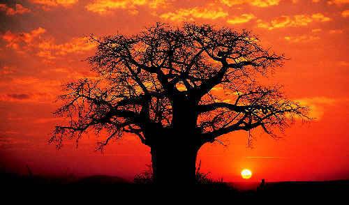 ARVORE DA VIDA by Baoba