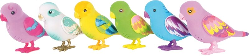 Groupe d'oiseaux copie