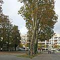 Chelles touche 371 000 euros du département pour aménager le <b>Parc</b> du souvenir