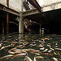 La nature a fait de ce centre commercial abandonné par l'Homme un fabuleux refuge pour des milliers de poissons