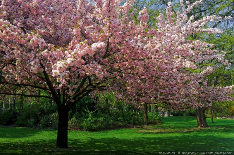 normal_A_taste_of_spring_colors_with_pretty_trees_in_flower_-2