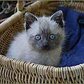 Histoire d'une famille <b>chat</b>, sixième partie