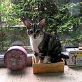La journée de Poupousse le <b>chat</b>