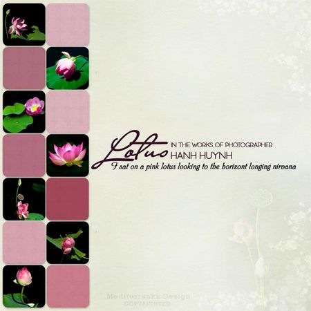 lotus_sketch