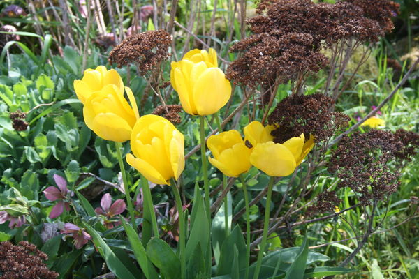 fleurs_de_printemps_016