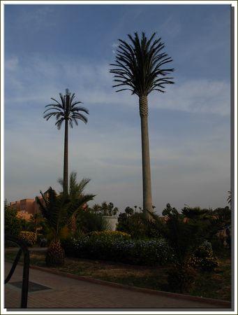 marrakech__447_
