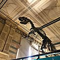 Natural history museum Londres