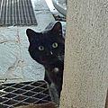 Le Chat Rêveur