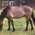 Races, et autres trucs sur les chevaux