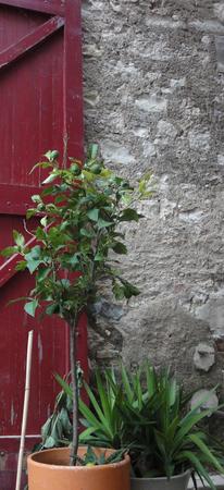 portail plante