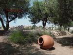 Jardins_mediteraneen