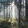 entre champs et forêts