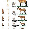 Infos Cheval