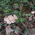 Ma passion pour les champignons