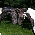 Passion chevaux de Lili.