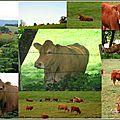 Instantanés, Instants d'été... # 12 : Oh la vache !