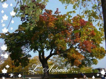 L_automne_