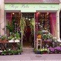 hoya bella fleurs