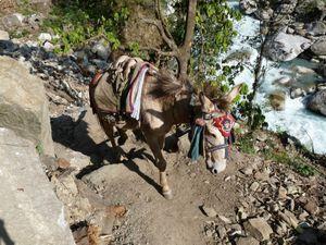 Trek Annapurna FZ28 - 0136