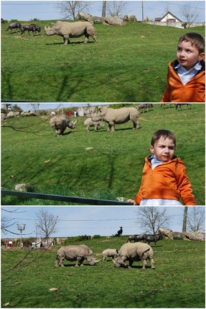 2010_04_11_zoo_de_Beauval16
