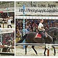 Le grand tournoi de Chevalerie à la Cité de <b>Carcassonne</b> - Spectacle