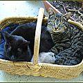 Histoire d'une famille <b>chat</b>, cinquième partie