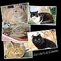 Les <b>chats</b> du Luberon