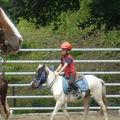 Equitation western & ethologie