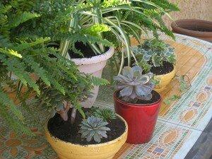 plantes_2