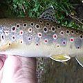 Fly Fish Dive : le blog de Florian