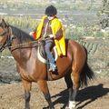Les chevaux de Maragnénes