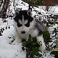JILLIAN HUSKIES